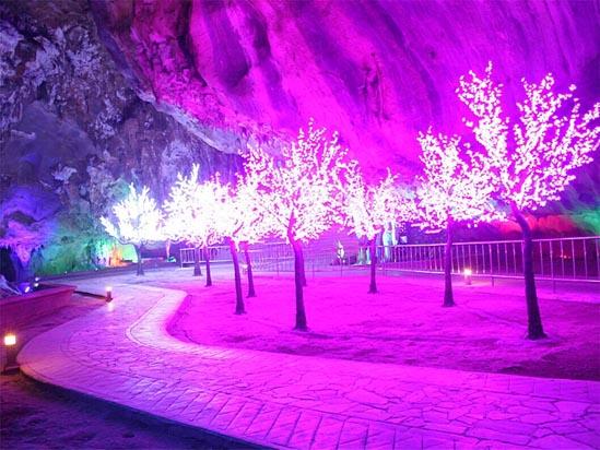 英德宝晶宫天鹅湖温泉度假酒店浪漫樱花林